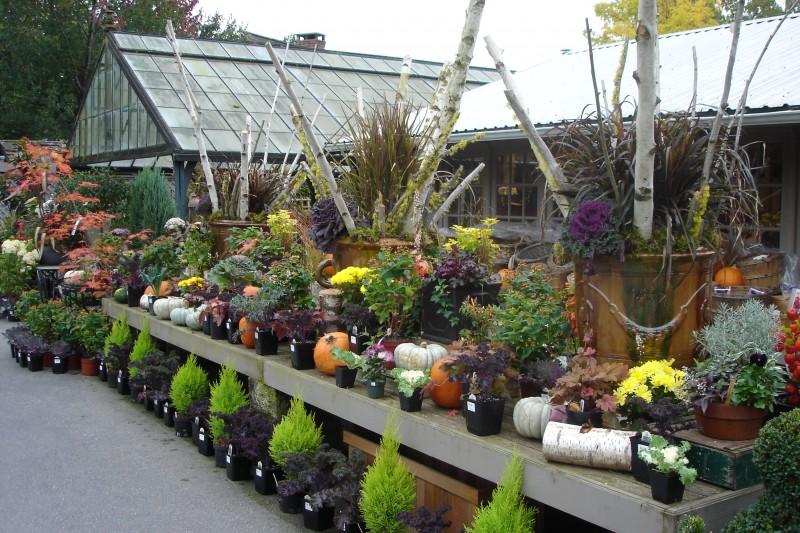 Fall2010 Nursery (5)