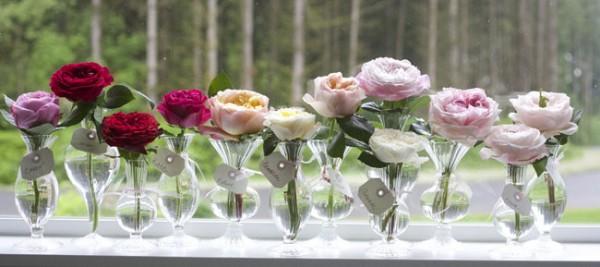 David-Austin-Garden-Roses-600x267