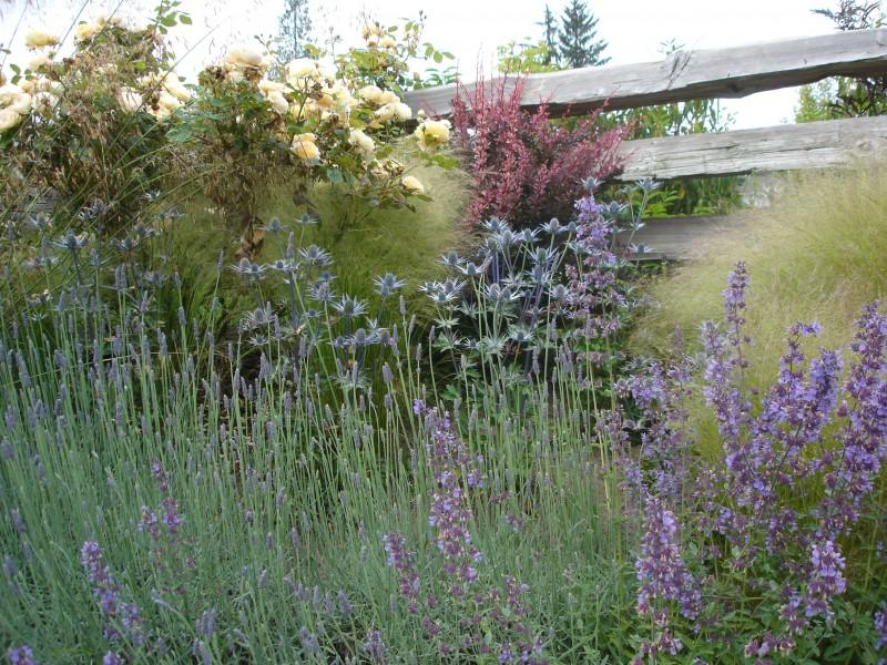High Summer Planting (2)